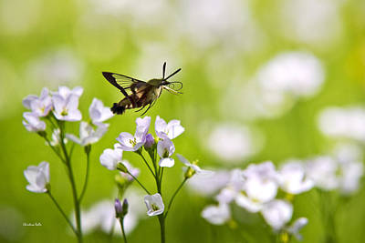 Hummingbird Clearwing Moth Flying Away Art Print