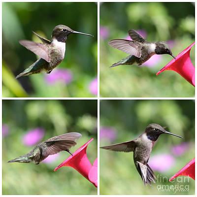 Photograph - Hummingbird Collage by Carol Groenen