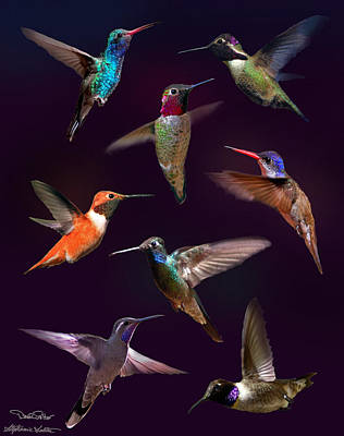Broadbilled Hummingbirds Photograph - Hummingbird Collage2 by David Salter