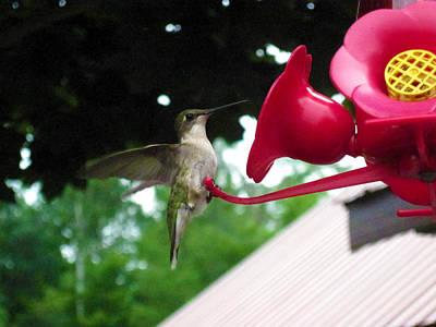 Hummingbird Art Print by Crystal Robinson