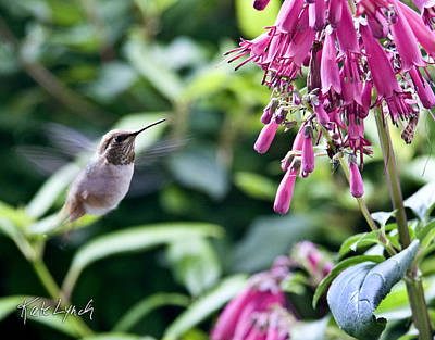 Photograph - Hummingbird Dance by Kate Lynch