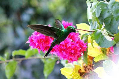 Photograph - Hummingbird Delight by Charlene Reinauer
