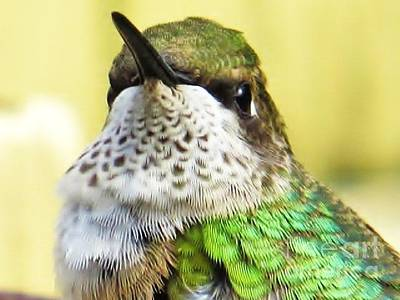 Photograph - Hummingbird Details 2 by Judy Via-Wolff