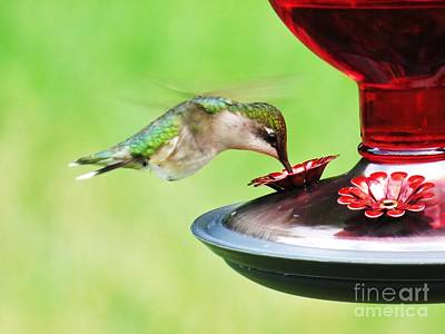 Photograph - Hummingbird Details 3 by Judy Via-Wolff