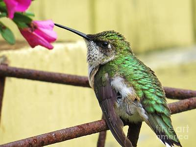 Photograph - Hummingbird Details 4 by Judy Via-Wolff