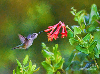 Photograph - Hummingbird Dives In 2 by Kerri Farley