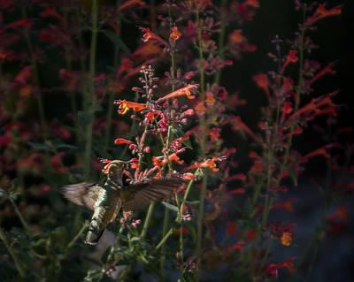Photograph - Hummingbird Feeding 2 by Ernie Echols