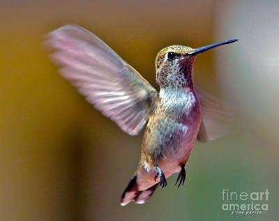 Hummingbird Frolic Art Print by Janice Rae Pariza