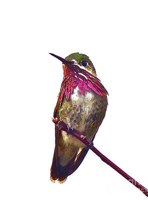 Archilochus Colubris Digital Art - Hummingbird by Heidi Peschel