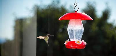 Hummingbird Hovering At Bird Feeder Art Print