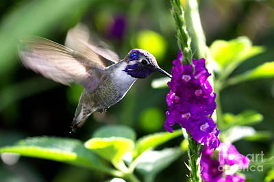 Hummingbird Photograph - Hummingbird I by Pamela Gail Torres