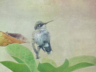 Photograph - Hummingbird I by Patti Deters