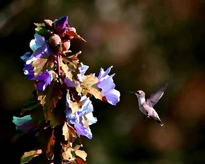 Photograph - Hummingbird II by Deena Stoddard