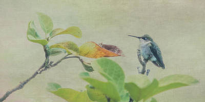 Photograph - Hummingbird II by Patti Deters