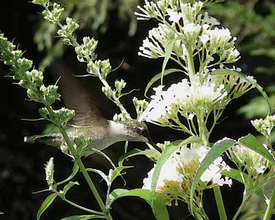 Photograph - Hummingbird In A Summer Garden by Margie Avellino