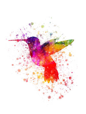 Birds Rights Managed Images - Hummingbird in color Royalty-Free Image by Aged Pixel