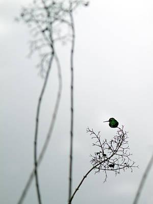 Hummingbird Photograph - Hummingbird In Fog 2 by Rebecca Cozart