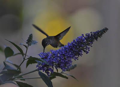 Photograph - Hummingbird In Gold by Rae Ann  M Garrett