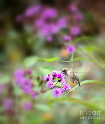 Photograph - Hummingbird In The Flowers by Kerri Farley