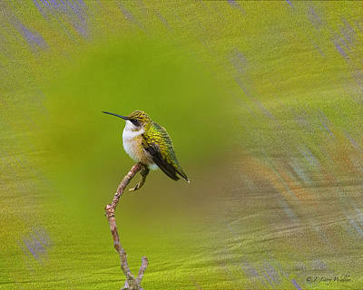 Digital Art - Hummingbird by J Larry Walker