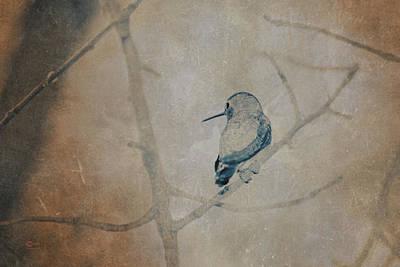 Photograph - Hummingbird by Jim Thompson
