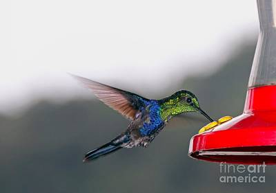 Mallard Wall Art - Photograph - Hummingbird by Carey Chen