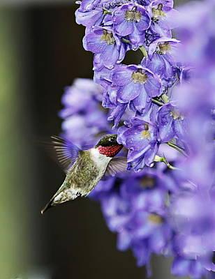 Photograph - Hummingbird by John Vose