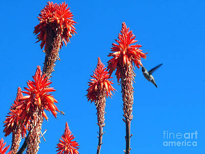 Fearlessness Photograph - Hummingbird by Kelly Holm
