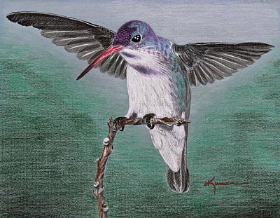 Drawing - Hummingbird by Kume Bryant