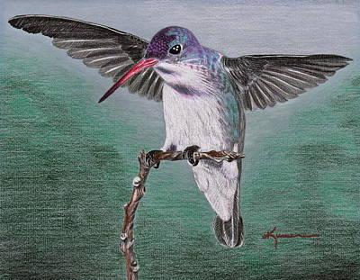 Art Print featuring the drawing Hummingbird by Kume Bryant