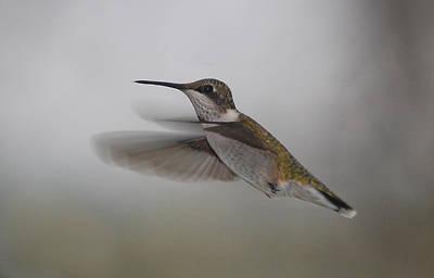 Art Print featuring the photograph Hummingbird  by Leticia Latocki