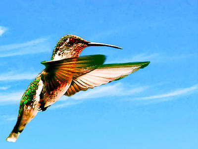 Painting - Hummingbird Lodi California by Bob and Nadine Johnston