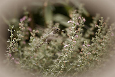 Photograph - Hummingbird Lounge by Bonnie Bruno
