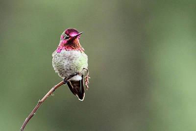 Botanical Photograph - Hummingbird by Maureen P Sullivan