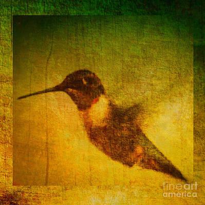Whiteoaks Photograph - Hummingbird Melody by Eva Thomas