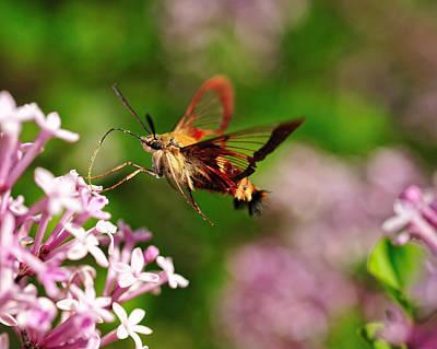 Digital Art - Hummingbird Moth by Angel Cher