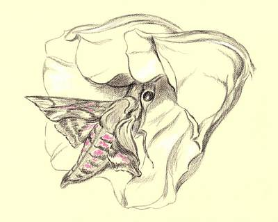 Drawing - Hummingbird Moth In Moonflower by MM Anderson