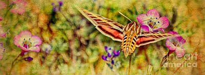 Photograph - Hummingbird Moth In Wildflowers by Pam Vick