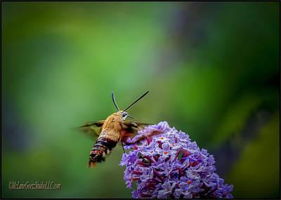 Photograph - Hummingbird Moth by LeeAnn McLaneGoetz McLaneGoetzStudioLLCcom