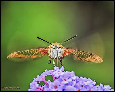 Photograph - Hummingbird Moth Strike by LeeAnn McLaneGoetz McLaneGoetzStudioLLCcom