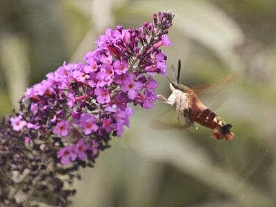 Mixed Media - Hummingbird Moth by Trish Tritz