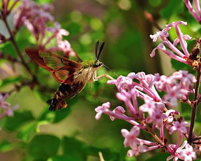 Digital Art - Hummingbird-moth2 by Angel Cher