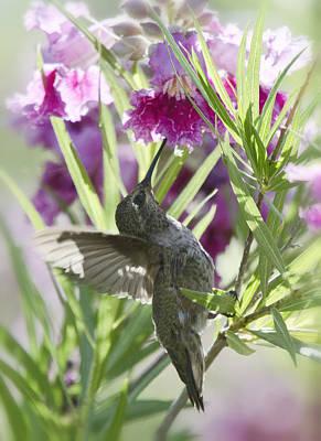 Photograph - Hummingbird On A Desert Willow by Saija  Lehtonen