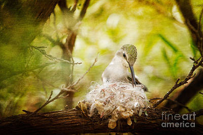 Photograph - Hummingbird On Nest by Marianne Jensen