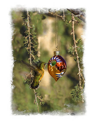 Photograph - Hummingbird Ornament by Lou  Novick