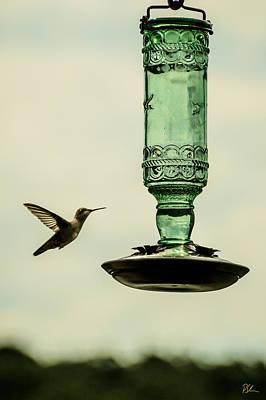 Vesna Antic Abstract Paintings Royalty Free Images - Hummingbird Royalty-Free Image by Pat Scanlon
