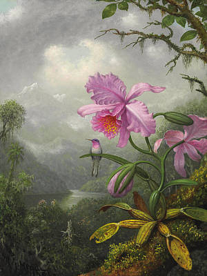 Apple Blossom Painting - Hummingbird Perched On The Orchid Plant by Martin Johnson Heade