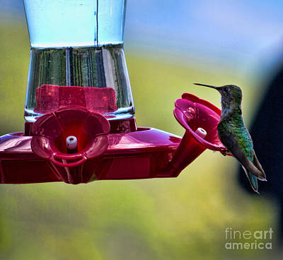 Photograph - Nectar For A Hummingbird  by Brenda Kean
