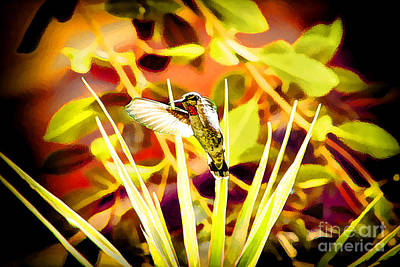 Digitalized Photograph - Hummingbird Posing For Picture by Mariola Bitner