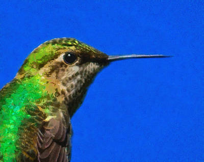 Digital Art - Hummingbird Profile by Ernie Echols